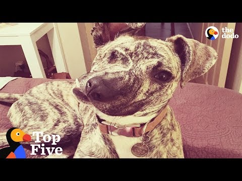Special Dogs That Just Need Some Extra Love | The Dodo Top 5