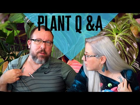 husband-and-wife-plant-q&a-|-plants-&-couple-tattoos