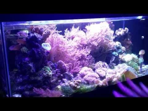 Trimming The Reef