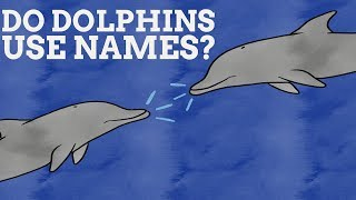 Do Dolphins Have Names For Each Other?
