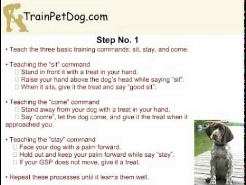 German Shorthaired Pointer Training: Stopping It From Chasing Your Cat