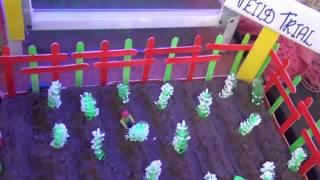 كيف النباتية المحورة وراثيا (BT Cotton) المنتجة ؟ (العلم المعرض 2016) (الإنجليزية) (1080p HD)