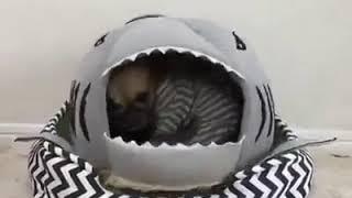 Pet Supplies Online - Shark Pet Bed