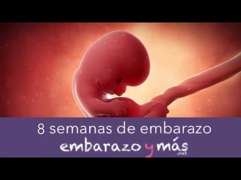 5436c87af 8 semanas de embarazo - Segundo mes - EMBARAZOYMAS - YouTube