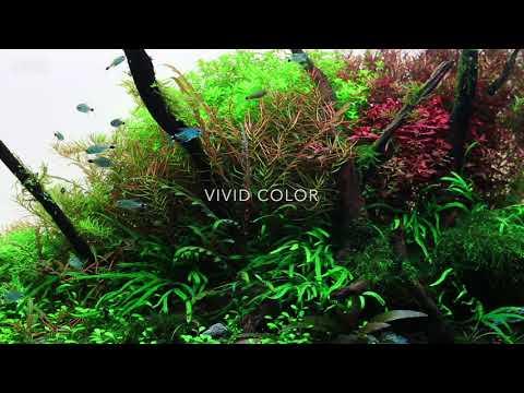*海葵達人*LA-R60台灣精品ISTA伊士達RGB水草造景燈2尺(APP智能控制)LED跨燈60cm植物燈