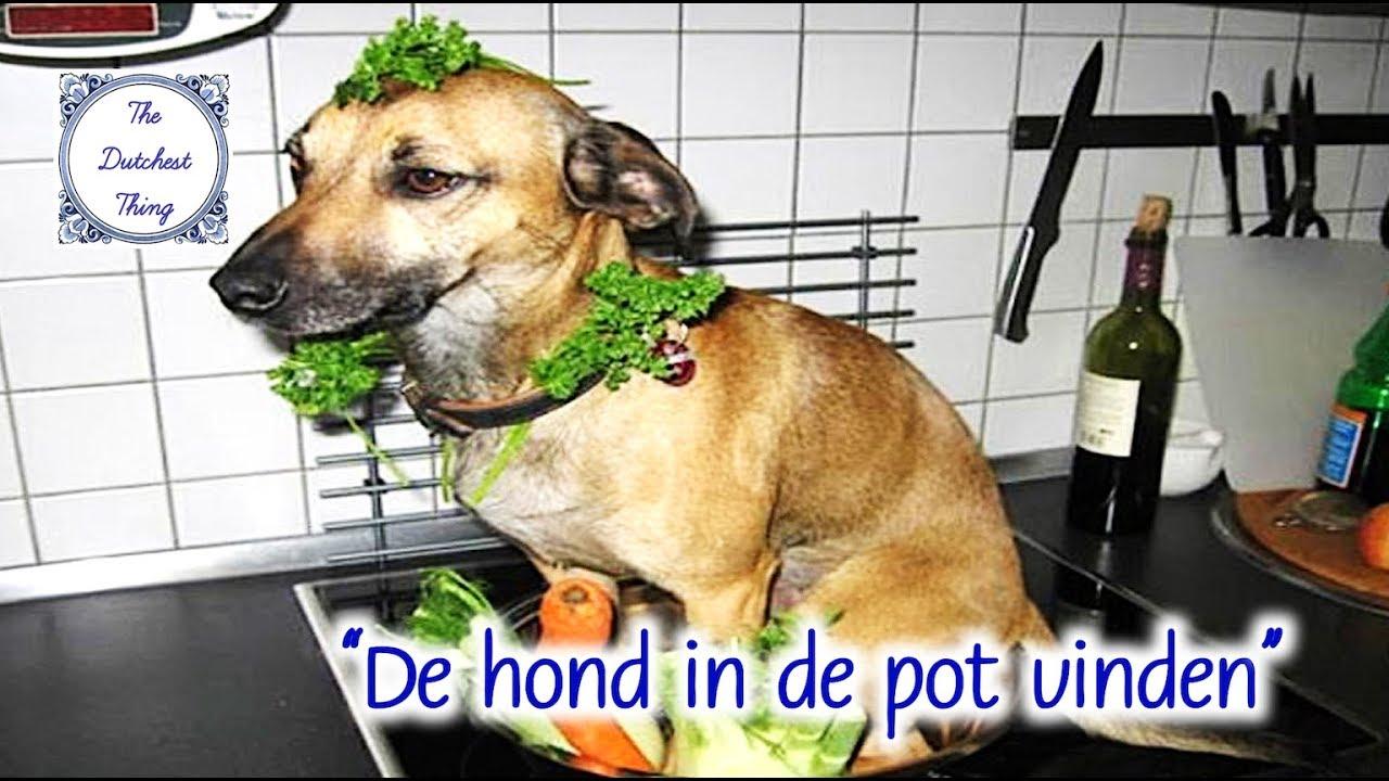 s02e02 - the dutchest thing - de hond in de pot vinden - youtube