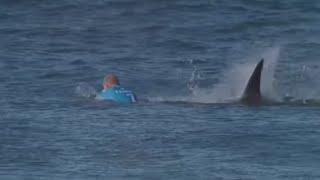 Ataque de tiburón en directo en la TV
