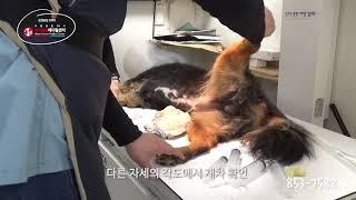 재발성 방광결석, 수술_서울금천24시 우리동물메디컬센터