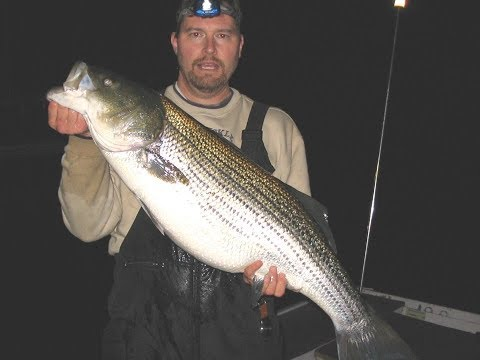 How To Catch Striped Bass In Lakes And Rivers