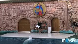 68, Первые дни отдыха в Адлере, шоу с дельфинами