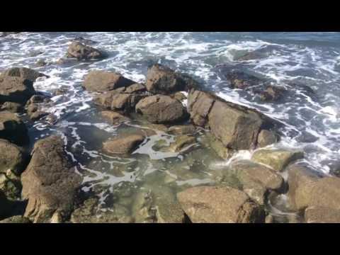 Fukushima news; SAN Mateo county California  Dead tide Pools March 14 2017