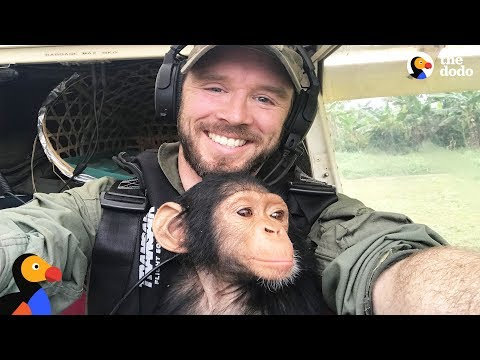 Pilot and Rescued Baby Chimp Bond During Rescue Flight | The Dodo