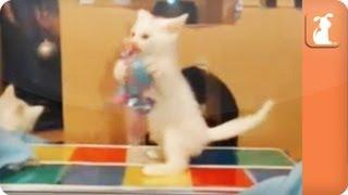 Disco Kitties - KittenCam