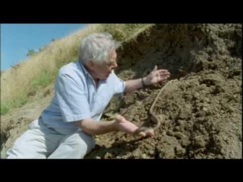 The Giant Earthworm