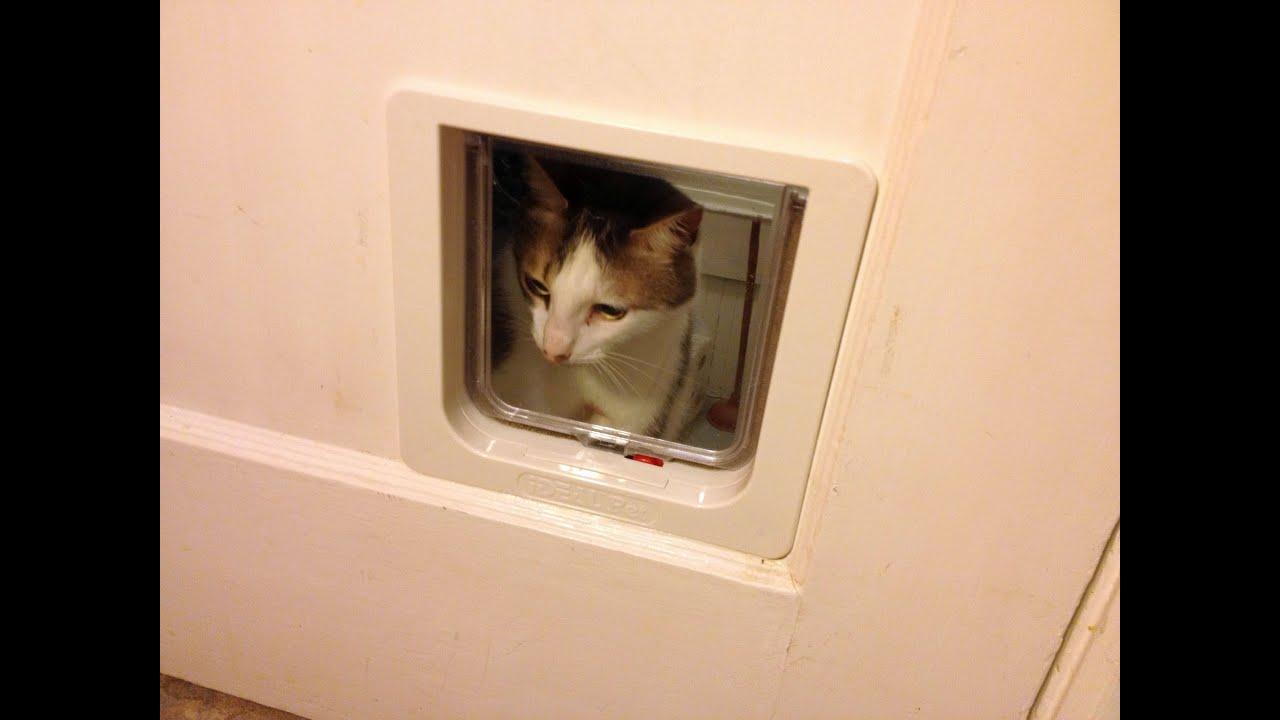 Superior How To Install A Pet Door