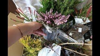 Самые интересные и необычные садовые растения из Гаршинки