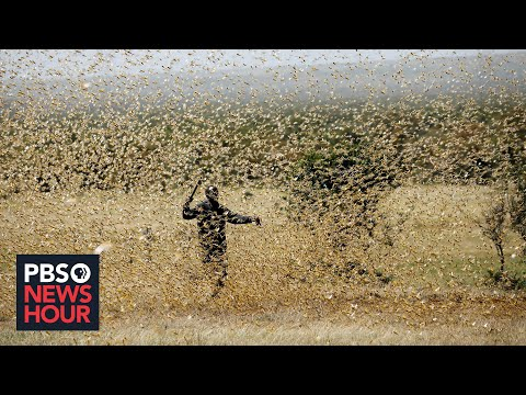 The pandemic threatens the people of East Africa -- and now locusts threaten their food