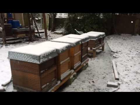 Kış Mevsiminde Arıların Kontrolü
