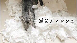 【保護猫】ティッシュで盛大に遊んだ猫たち
