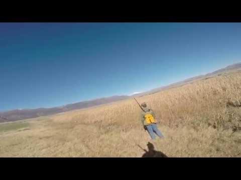 More Pheasant Hunting near Moroni Utah
