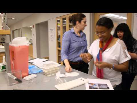 The Rockefeller University Science Outreach Program