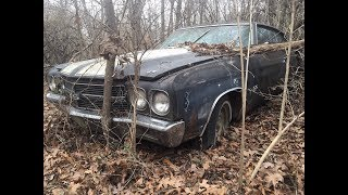 Animals Found Living In A $6-figure Rare 1970 L78 Chevelle Rescued From The Woods In Arkansas