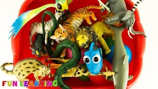 Lets Learn Wild Animals and Colors For Kids with Box Full of Wild Animal Toys