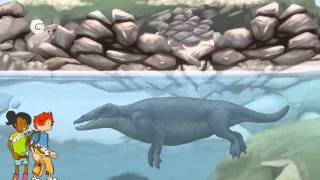 Evolution of the Whale