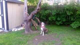 Dog Leg Workout And Jump Training