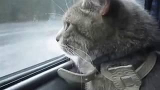видео Расписание автобусов Барнаул — Горно-Алтайск