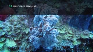 Expedición a los arrecifes de Cayo Nuevo y Alacranes Junio 2016