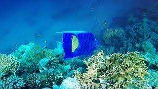 Коралловый риф и затонувший корабль отеля Steigenberger Alcazar Egypt Charm El Cheikh