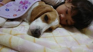 ビーグル #うぃるさん #Beagle なんとなくこういう日もありますよね。...