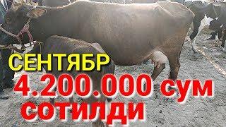 МОЛ БОЗОР МАХСУС 01-кисим