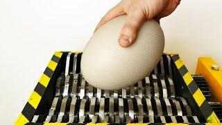 Shredding Ostrich Egg   Experiment At Home
