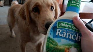 🐕 Service Dog Makes Hilarious Mistake! 😂 (7/6/17)