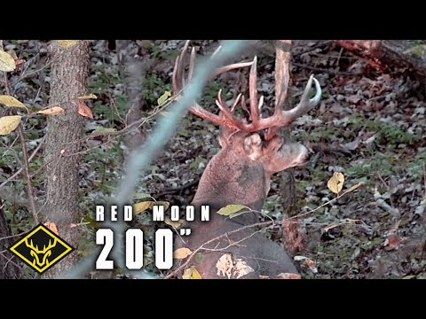 Hunt For #4 - 200-inch GIANT Buck!