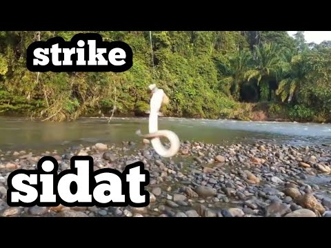 NAJUR SIDAT DI SPOT BARU, HASILNYA MANTAP | EEL FISHING, TRADITIONAL FISHING, PRIMITIVE FISHING