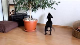 Собака жжёт! Поднимает настроение на весь день!)))
