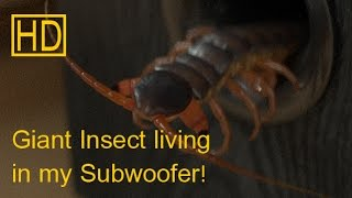 Giant Insect Living in my Subwoofer! (Original HD)