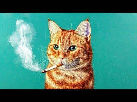 Вопрос: Почему жирных и пушистых котов постоянно хочется погладить и потискать?