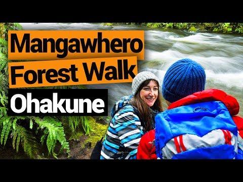 Mangawhero Forest Walk in Ohakune - New Zealand's Biggest Gap Year – Backpacker Guide New Zealand