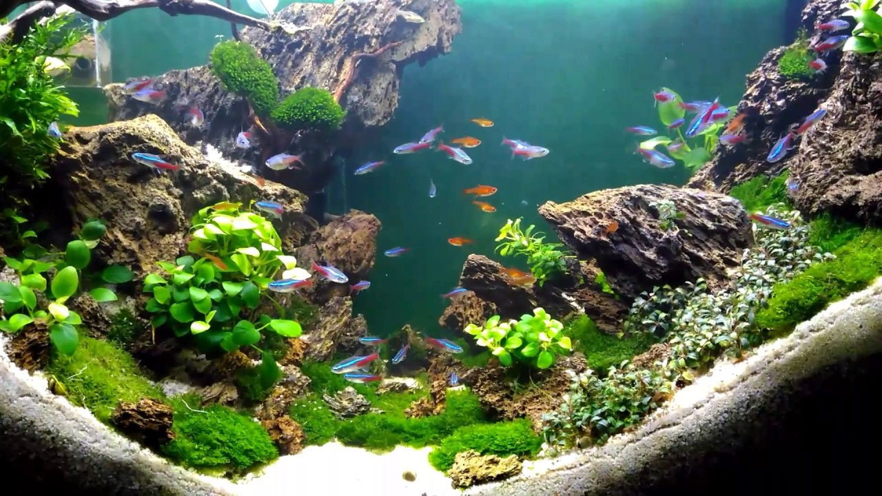 Aquascape design - YouTube