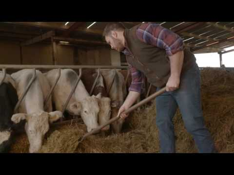 The Future for Beef Farming in Ireland