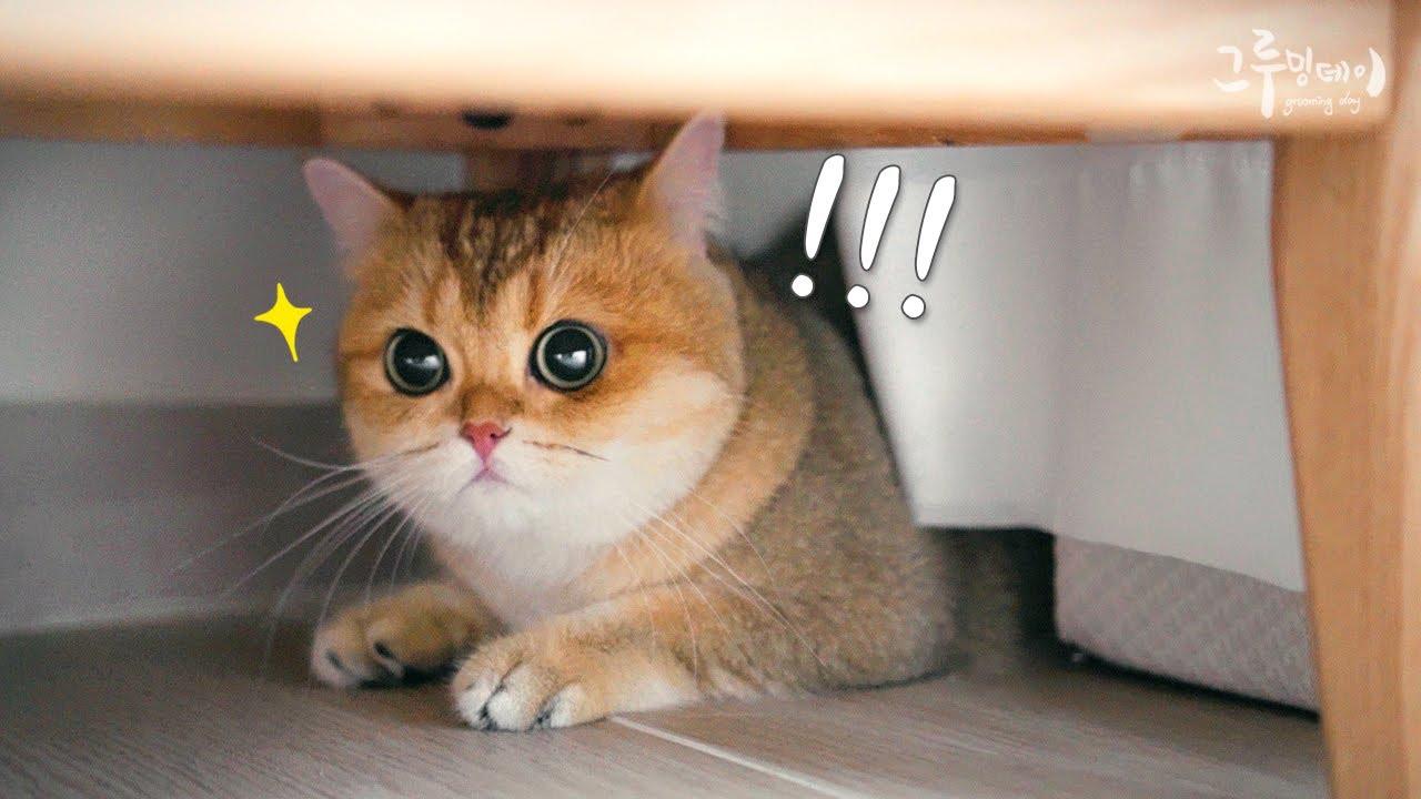 천둥번개 소리에 놀란 고양이들 극과극 반응
