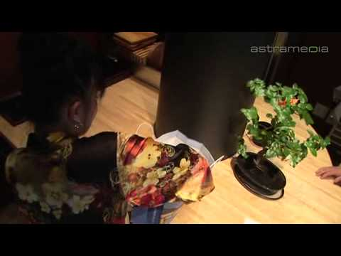 Restaurant Nippon Sun - Fresh, fast, creative, trendy! - Pfäffikon