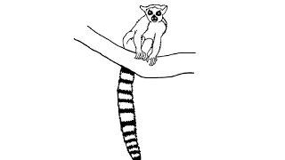 How to Draw a Lemur / Как нарисовать лемура
