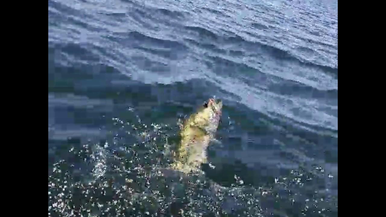 Lake skinner bass fishing youtube for Lake skinner fishing report