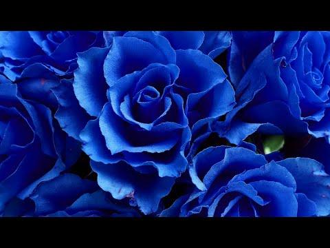 Восприятие синего цвета .Здоровье и характер.