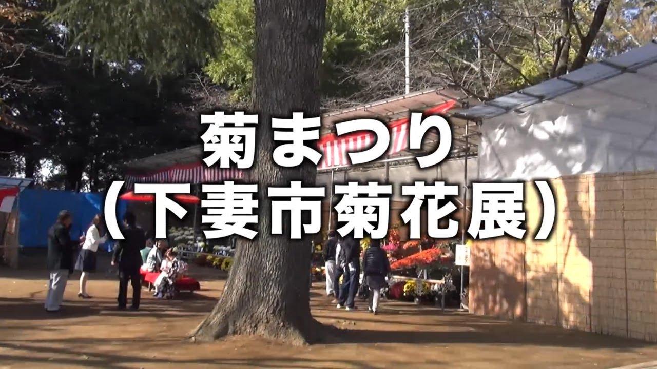 [2019-11-05]<br >茨城県下妻市-関東最古の八幡様:大宝八幡宮の菊まつり